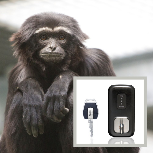 Twycross Zoo secures primates with Cliq mechatronic technology